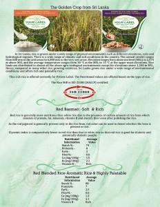 RiceBrochure_8halfx11_Brochure_Side1_PRINT